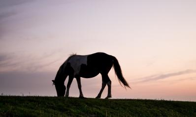Les sports équestres