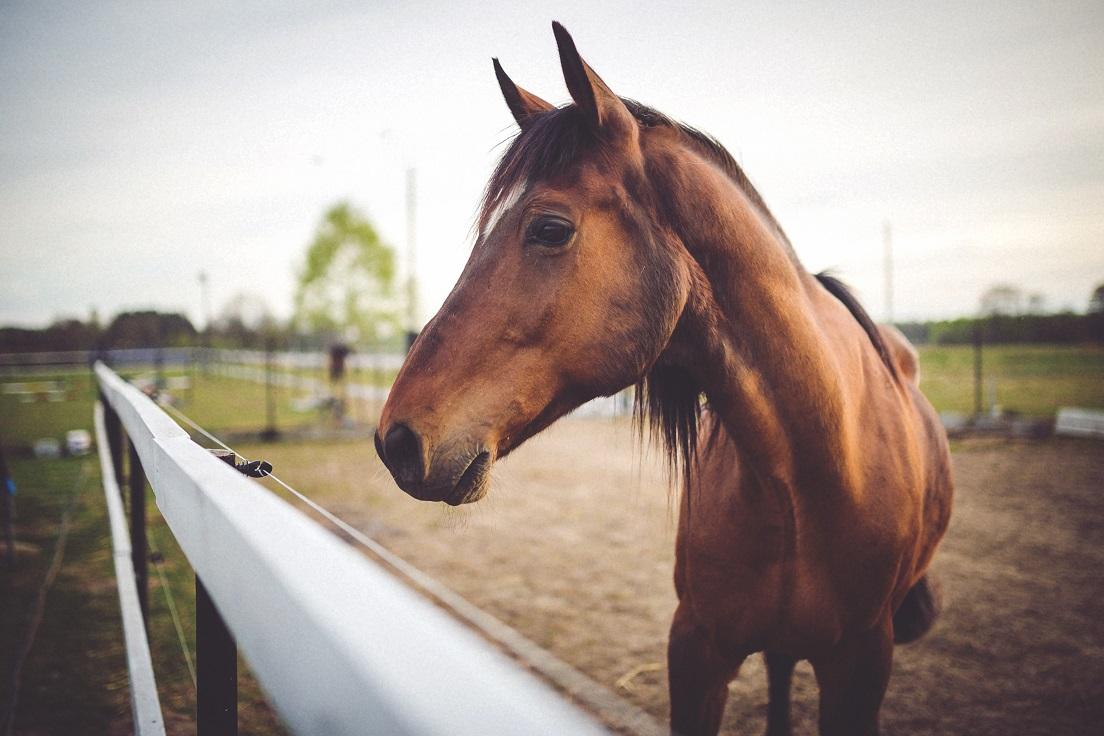 cheval-de-pres