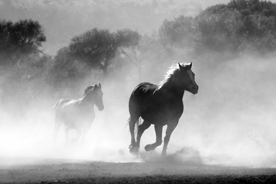 chevaux-galop