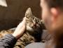 Le chat, un allié pour votre bien-être